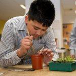 Transplanting seedlings at school. Picture; SIRA Studio/RHS