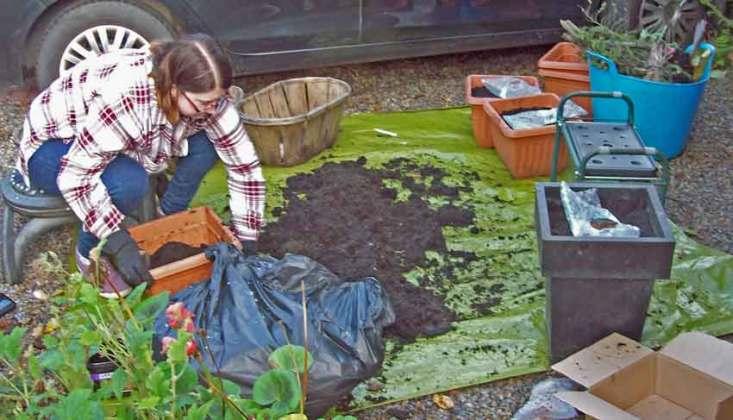 Vanessa planting away...
