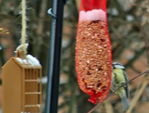 Fleeting (excuse for blurry) shot of a blue tit
