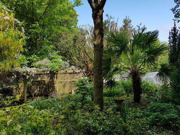Whickham Hermitage Community Garden, Whickham, Tyne & Wear - windmill palm and pergola