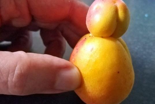 Odd apricot duo... insert caption here!