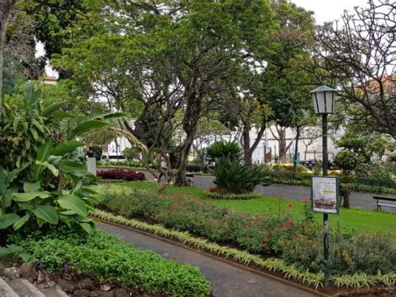 Looking through Funchal Municipal Garden