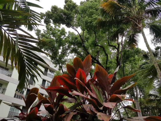Very old, tall sub-tropical trees edge Funchal Municipal Garden
