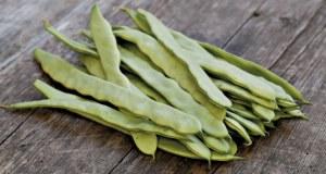 Climbing French Bean Limka (Organic). Picture; Johnsons