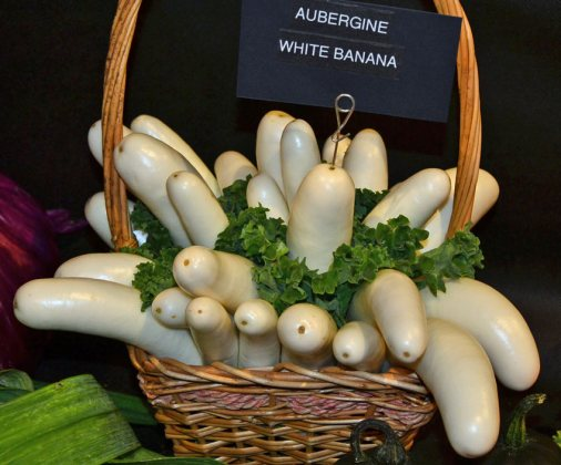 NEHS aubergine White Banana