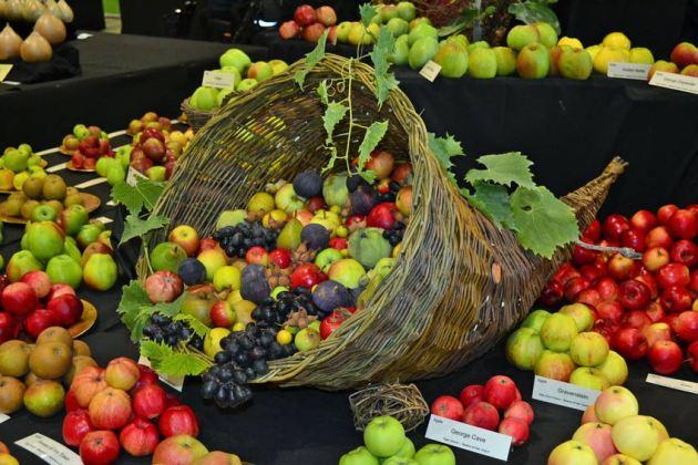 Cornucopia on RV Roger's fruit stand
