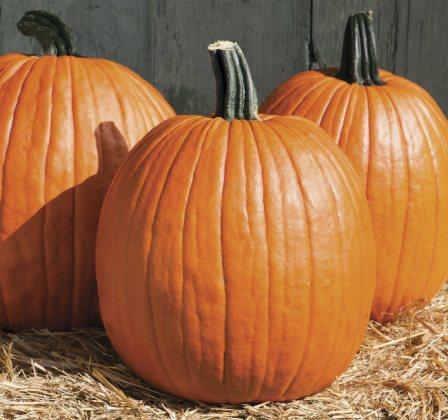 Pumpkin Cargo. Picture; DT Brown