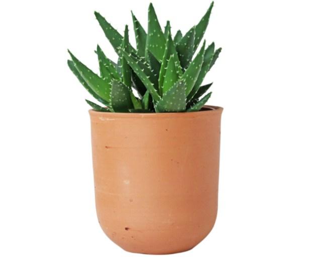 Curved terracotta pot. Picture; Scaramanga Shop