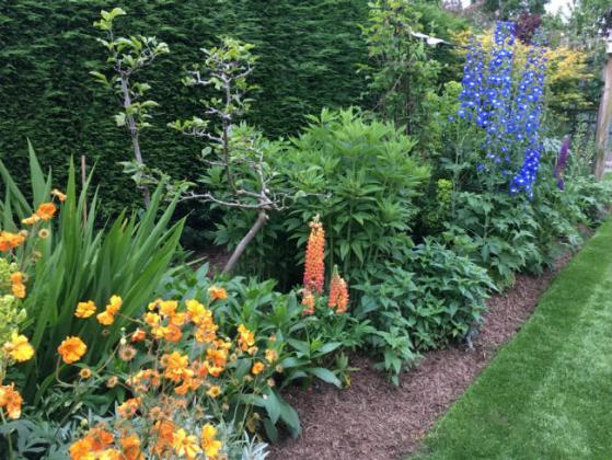 Geoff and Jackie's garden. Picture; Strulch