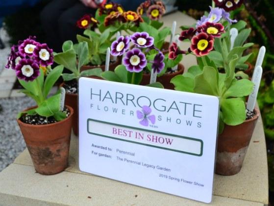 Perennial Legacy Garden voted Best in Show