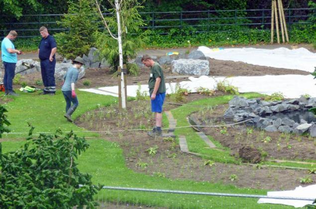 Planting round a birch