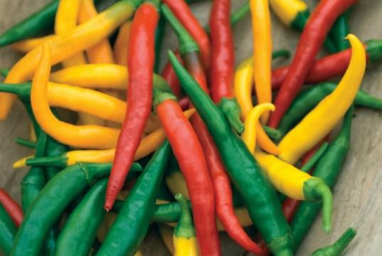 Pepper (Hot) Devils Brew. Picture; Mr Fothergill's
