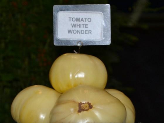 Tomato White Wonder