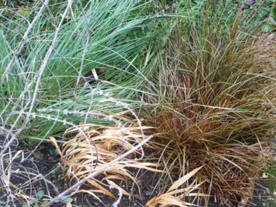 A succession of grasses