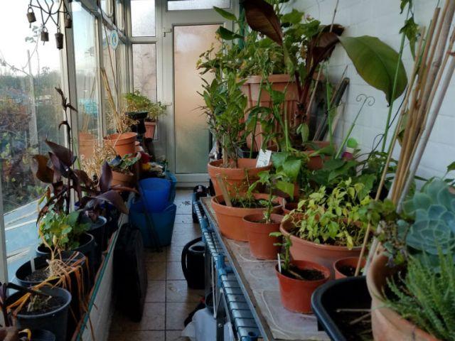 Shambolic mess and dead tomatoes, November 30