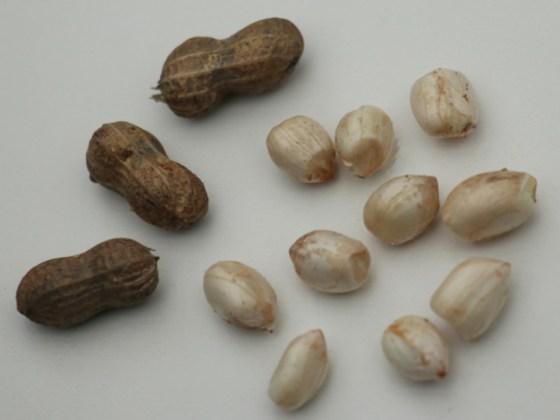 Peanut Justwhite. Picture; Lubera