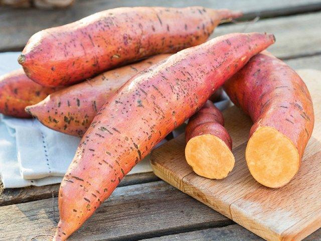 Sweet potato Erato Deep Orange. Picture; DT Brown