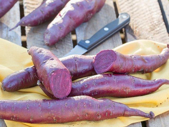 Sweet potato Erato Violet. Picture; DT Brown