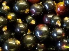 Jewel-like blackcurrants
