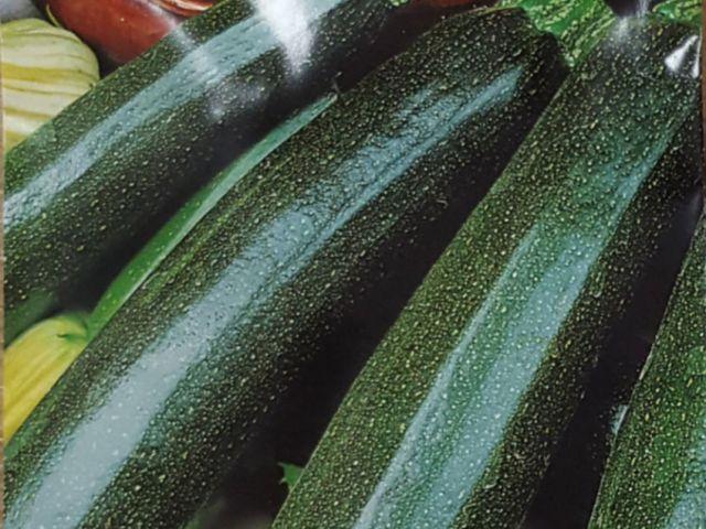Courgette Zucchini. Picture; Mr Fothergill's
