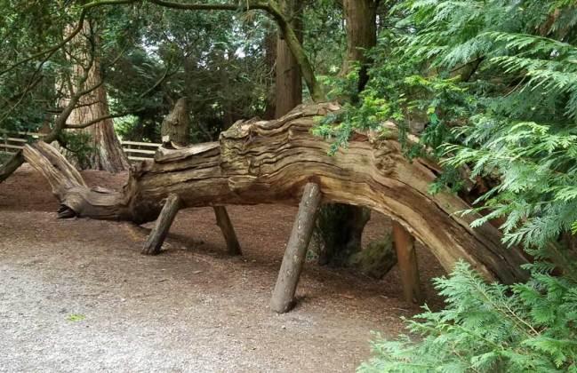 Weird log rhino!