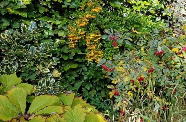 Autumn pond, October 8