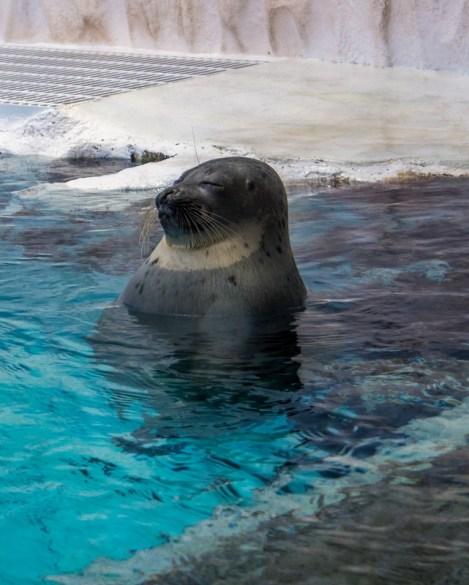 Osaka Aquarium et château- Manekitravel.com