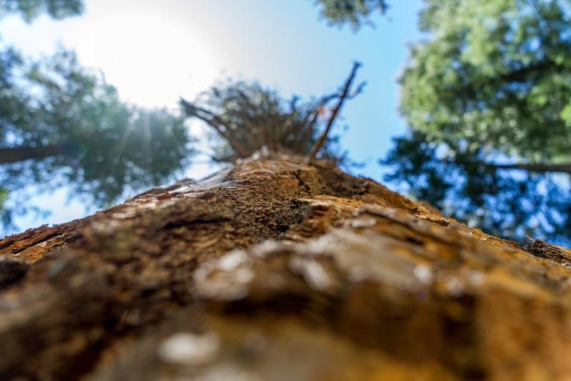 Yosemite - photo de voyage