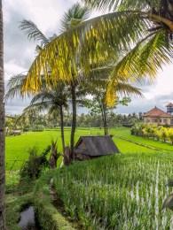 visiter Ubud