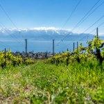 <a class=&quot;amazingslider-posttitle-link&quot; href=&quot;https://www.manekitravel.com/un-week-end-en-suisse/&quot; target=&quot;_self&quot;>Un week-end en Suisse</a>