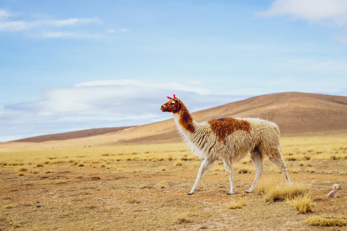 2 semaines en Bolivie - itinéraire et budget