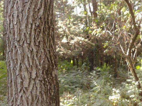 gabriela-apostu-copacul-meu2