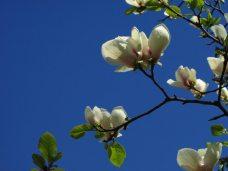 maria-cazacu-primăvara-09