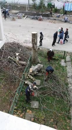 toaletare-pomi-strada-Negru-Voda-Mangalia-05