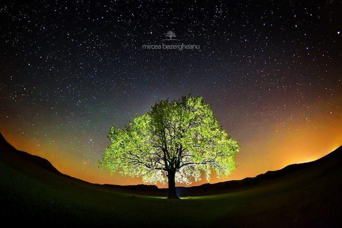 Copacul lui Mircea Bezergheanu.
