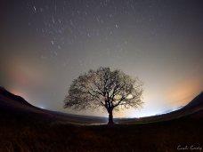 Costi_Carîp-copacul-lui-MirceaB-03
