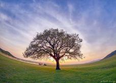 Costi_Carîp-copacul-lui-MirceaB-03d