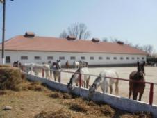 copii-din-județul-Constanța-au-vizitat-Herghelia-Mangalia-14