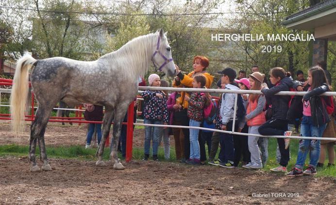 copii-din-județul-Constanța-au-vizitat-Herghelia-Mangalia-26