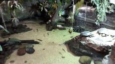 Dallas_World_Aquarium_MN (28)