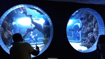 Dallas_World_Aquarium_MN (34)