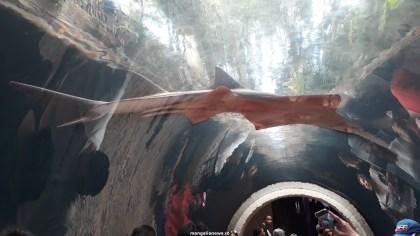 Dallas_World_Aquarium_MN (38)
