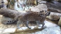 Dallas_World_Aquarium_MN (54)
