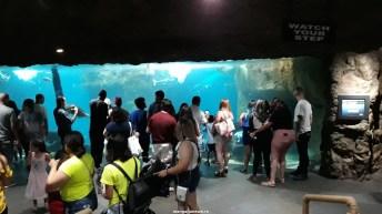 Dallas_World_Aquarium_MN (66)