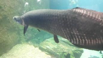 Dallas_World_Aquarium_MN (68)