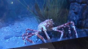 Dallas_World_Aquarium_MN (71)