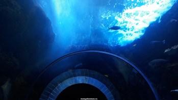 Dallas_World_Aquarium_MN (78)