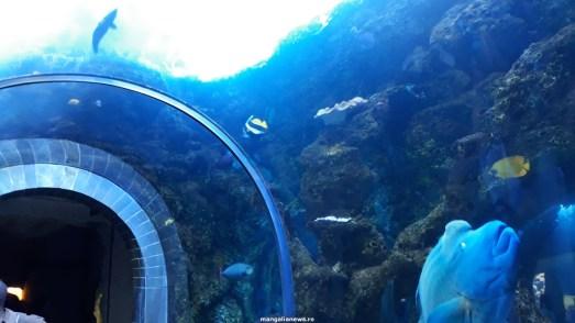 Dallas_World_Aquarium_MN (79)