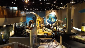Perot Museum of Nature and Science din Dallas (77)
