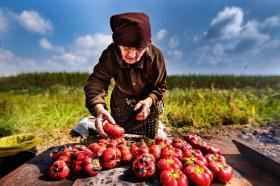 Sorin Onisor Maicile neamului romanesc-81 - undeva in Bucovina - batrana pregatea zacusca penru nepoata de la Londra